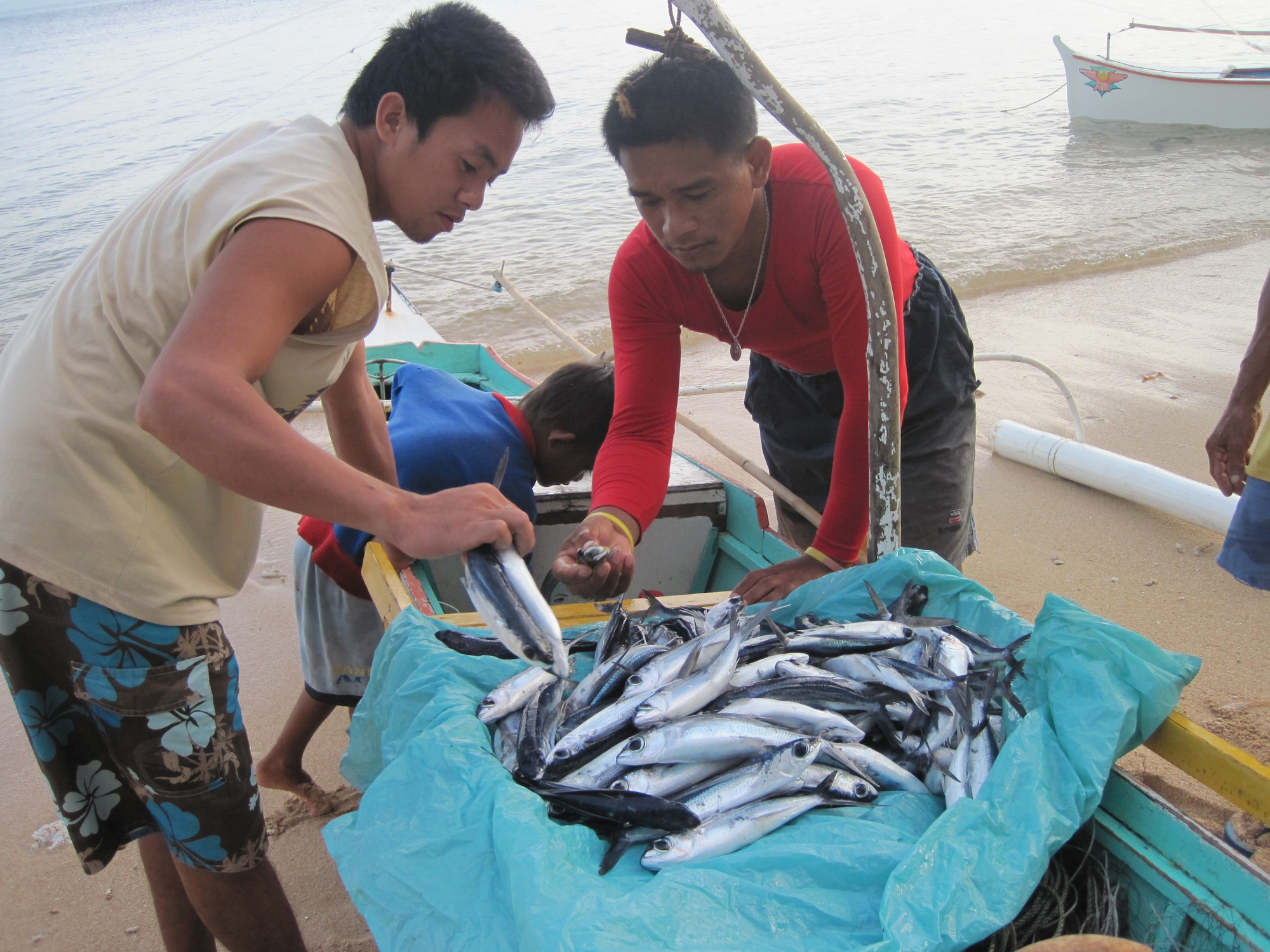 Fishers in Cantilan, Philippines examine their catch.
