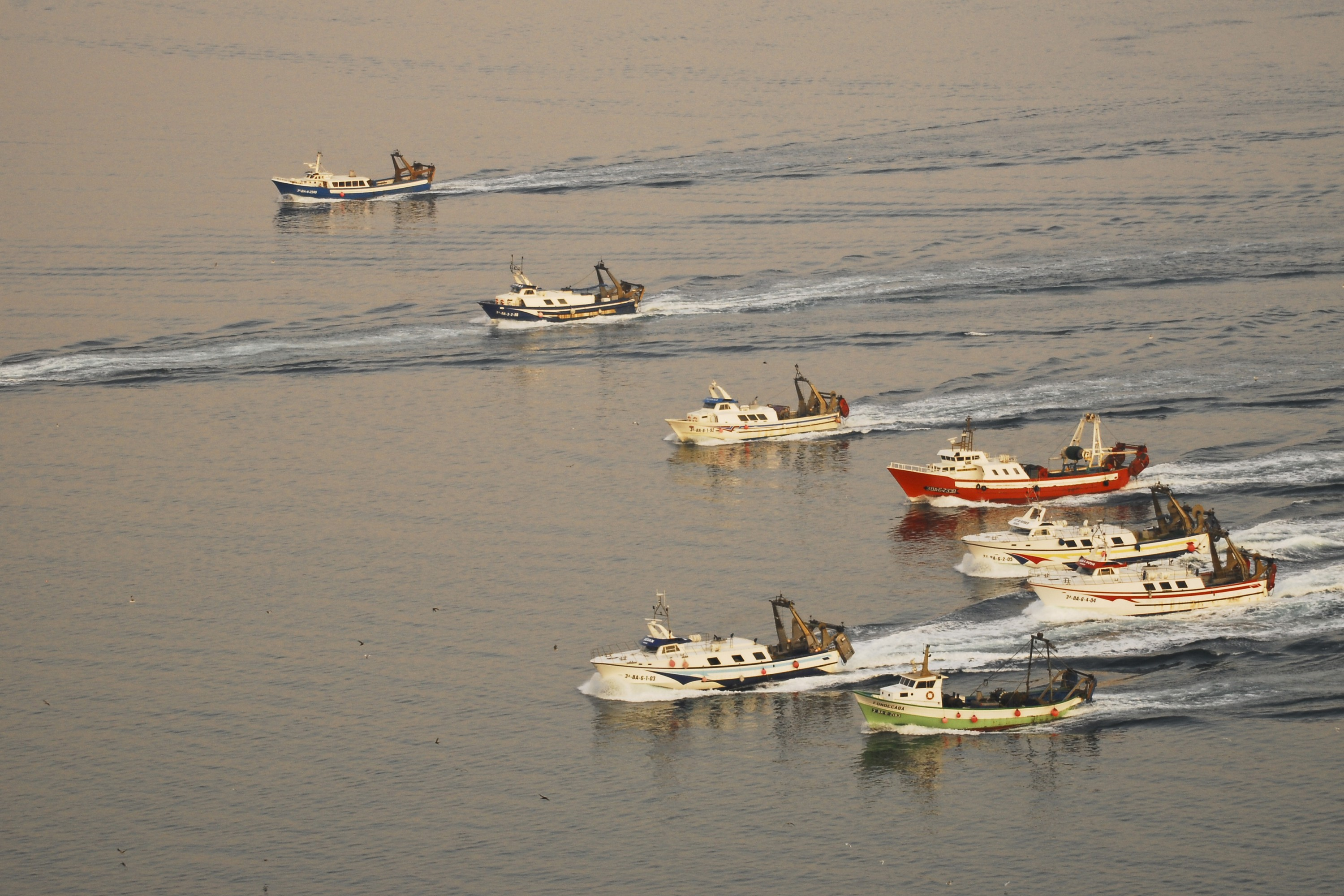 Catalan bottom trawlers race towards the best fishing grounds in Roses, Spain.