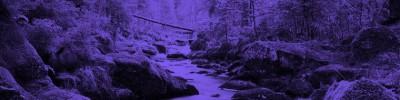 environment_purple