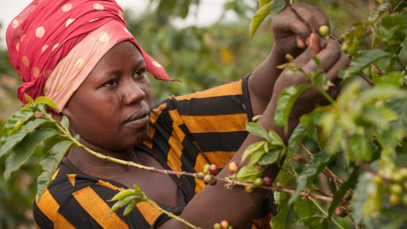 In Rwanda, coffee production is one of the fastest growing sectors and has fueled the country's economic development. And with major international buyers interested in Rwanda's specialty coffee production, Bloomberg Philanthropies has helped ensure that more women are not only a vital part of this growth – but emerge as strong participants in the international coffee market.