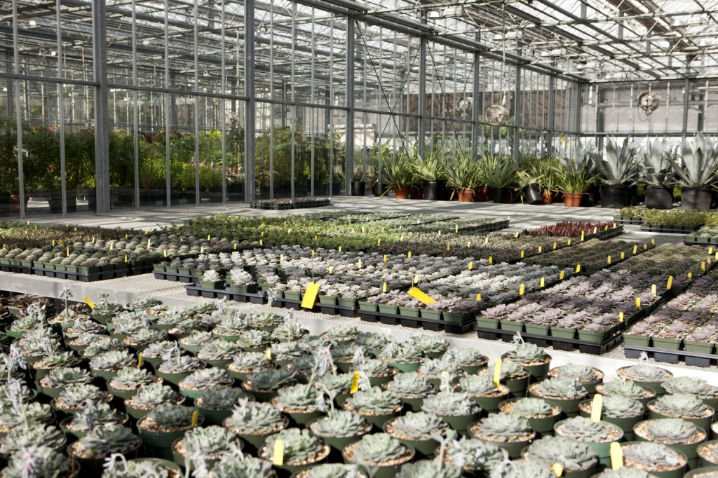 Months Before FRIDA KAHLO: Art, Garden, Life Opened, Horticulturists In  NYBGu0027s Nolen Greenhouses For Living Collections Began Propagating The  Thousands Of ...