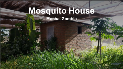 Mosquito House