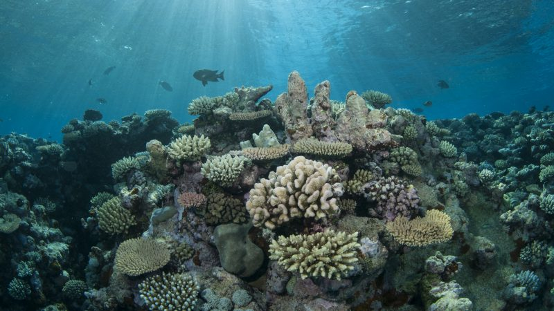 50 Reefs Q&A: Raising awareness on the importance of coral reef ...