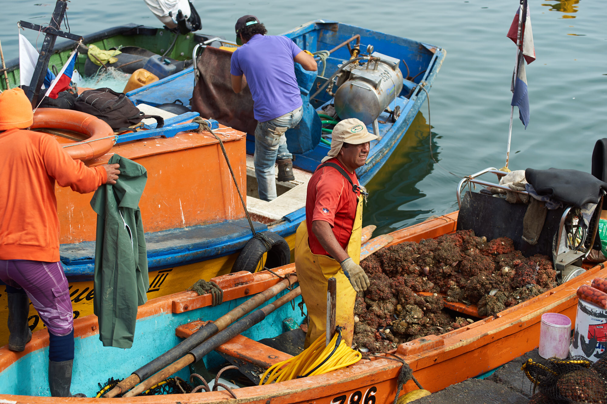 Local Filipino along the Tañon Strait collect shellfish and other marine life to supplement their diets and incomes