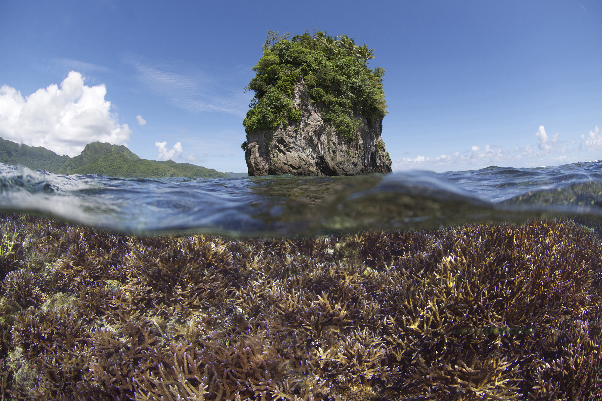 The coral bleaching event started in late 2014 – this is one of the early images taken in American Samoa before and during the bleaching.