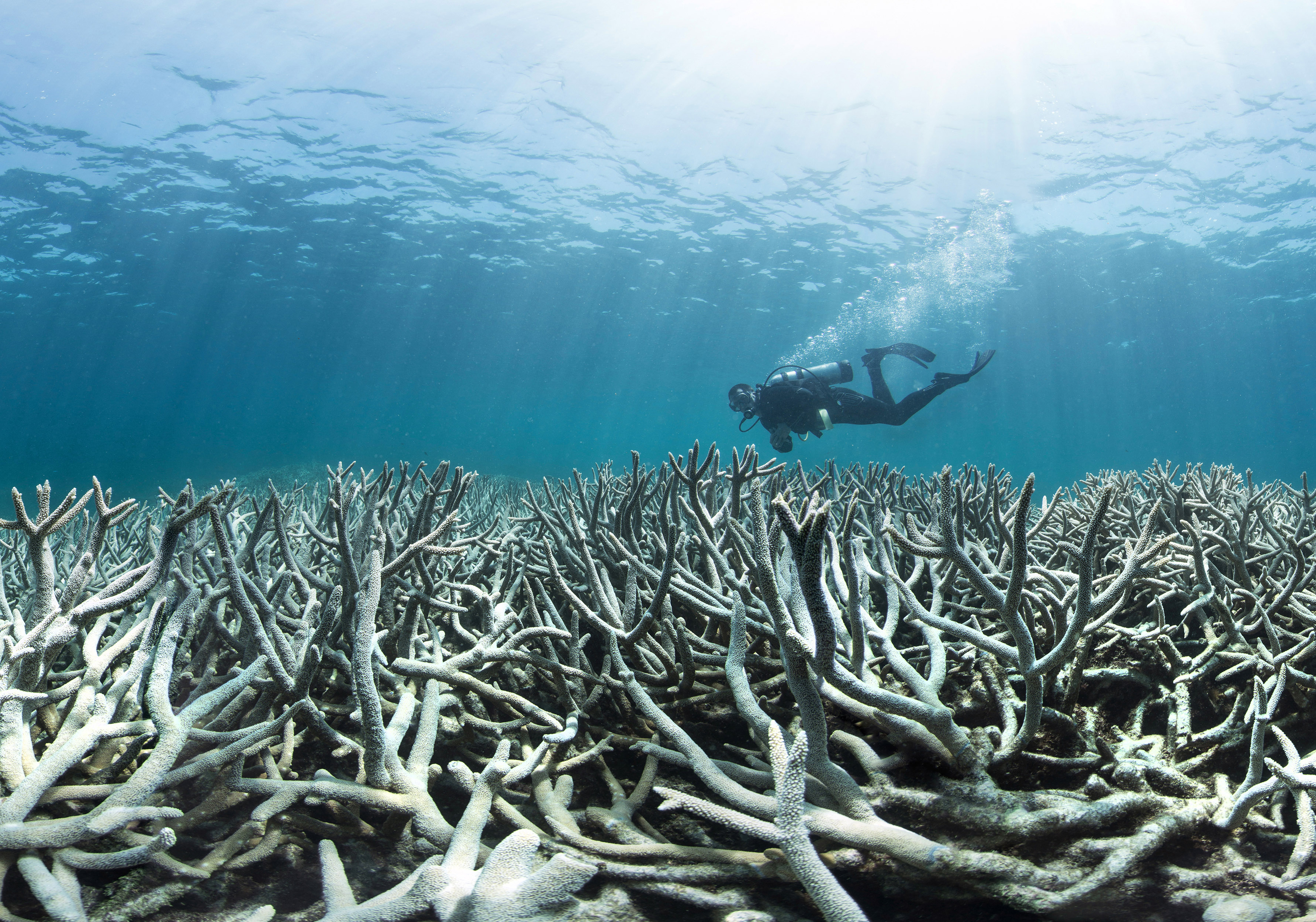 When the Great Barrier Reef started bleaching in 2016 the 3rd Global Bleaching Event hit the front pages.