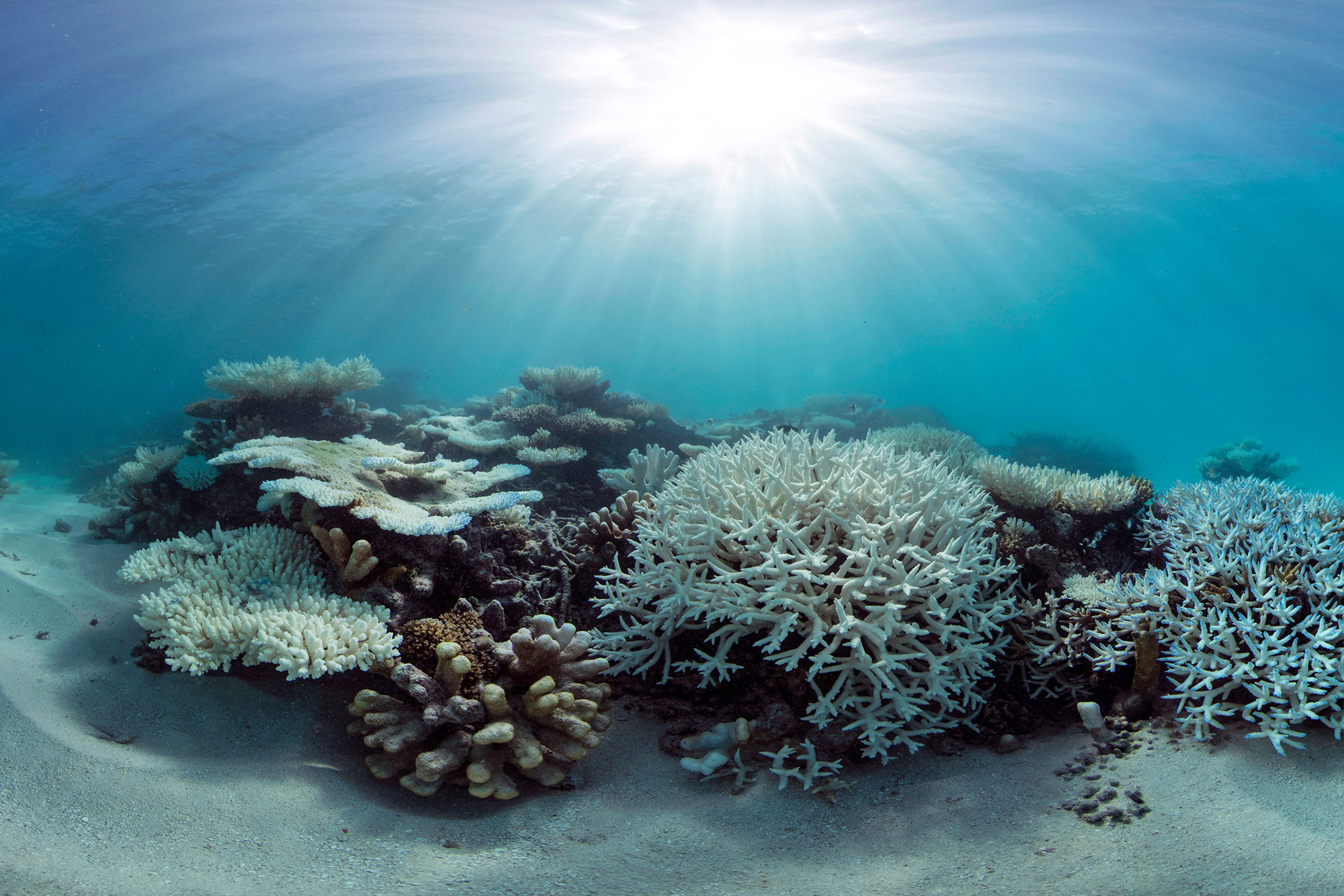 The bleaching in the Maldives in 2016 was particularly visual. Pristine reefs turned bright white and many died.