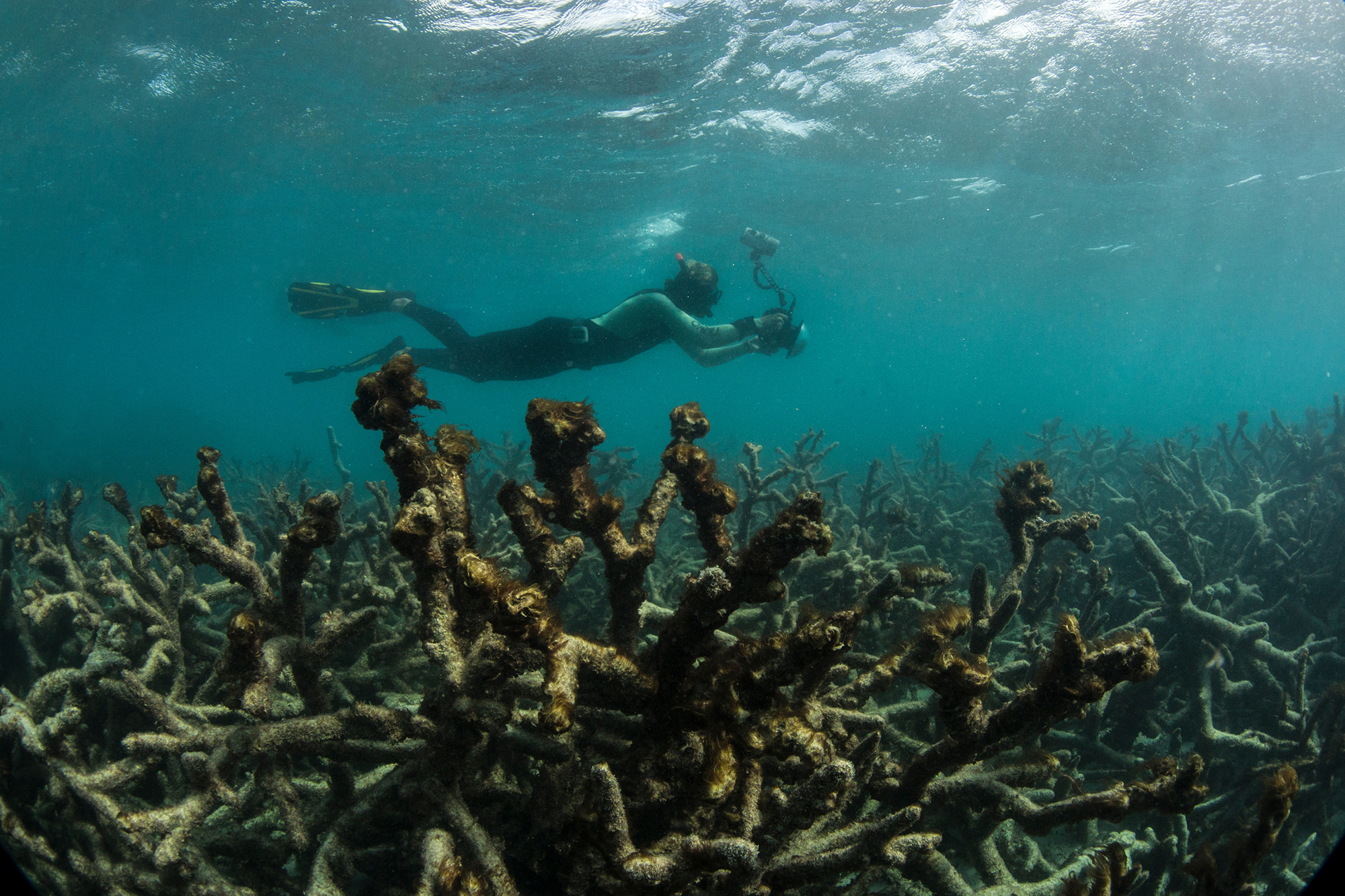 In 2016 the Great Barrier Reef lost 22% of its corals due to the bleaching event – this image captures the aftermath at Lizard Island.
