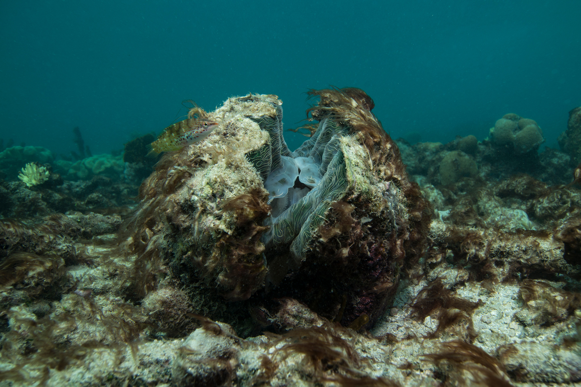 Imagery of the animals dying on the Great Barrier Reef were some of the most powerful – this once beautiful giant clam is close to death due to the bleaching event.