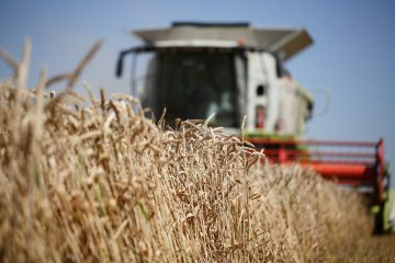 A combine harvester, manufactured by Claas KGaA, drives through a wheat field during the summer harvest on a farm operated by Kuban Agroholding, a unit of Basic Element Co., in Ust-Labinsk, Russia, on Monday, June 27, 2016. Russian wheat-export prices dropped to a six-year low last week as prices in major competitors such as the U.S. and France fell and harvesting of a bumper crop was about to start. Photographer: Andrey Rudakov/Bloomberg
